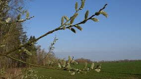 Vårnatur, filial i vinden lager videofilmer