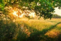 Vårnatur i den soliga morgonen Sikt på träd för gräsplan för våräng från under Härliga solstrålar till och med filialer Royaltyfri Fotografi