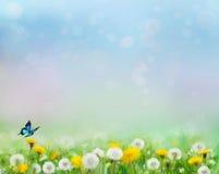 Vårnaturbakgrund med maskrosfält stock illustrationer