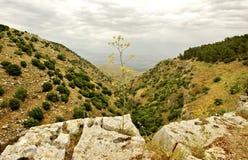 Vårnatursikt Galilee Arkivfoto