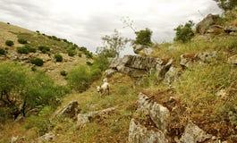 Vårnatursikt Galilee israel Arkivfoton