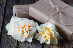 Vårpåskbakgrund med den nya vita påskliljapingstliljan blommar tätt upp Fotografering för Bildbyråer