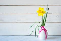 Vårpåskliljablomman i modern grå vas på tabellen med vit träshiplap stiger ombord bakgrund med kopieringsutrymme på sida horisont royaltyfria bilder
