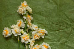 Vårpåskliljabouqet på den gröna hantverkpappersbakgrunden Royaltyfria Foton