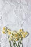 Vårpåskliljabouqet på den vita hantverkpappersbakgrunden Arkivbilder