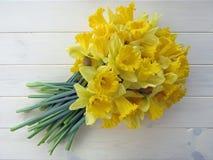 Vårpåskliljor Fotografering för Bildbyråer