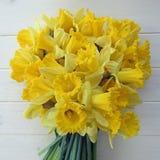 Vårpåskliljor Arkivfoto