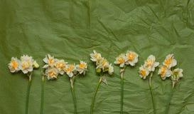 Vårpåskliljor på det gröna hantverket skyler över brister bakgrund Royaltyfria Foton