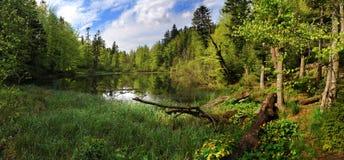 Vårpanorama av en skogsjö royaltyfri bild