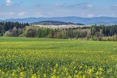 Vårpiedmont landscaper, när gräsplanen har olika skuggor arkivfoton