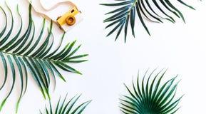 Vårpioner blomstrar på en gammal träbakgrund lantligt fotografering för bildbyråer