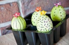 Vårplantor växthus Blomma för kaktus Lycklig påskferie Naturlig färg gjord easter äggbild grön livstid Blomma målade ägg arkivbilder