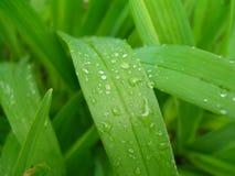 Vårregn fotografering för bildbyråer
