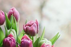 Vårrosa färgen blommar den suddiga abstrakta bakgrunden royaltyfria foton