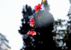 Vårrosa färgen blommar på filialen i stad parkerar Royaltyfri Foto