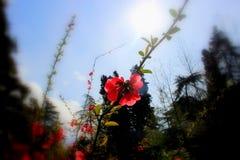 Vårrosa färgen blommar på filialen i stad parkerar Royaltyfria Foton