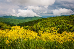 Vårsikt av appalachiansna från horisontdrev i Shenandoah Fotografering för Bildbyråer
