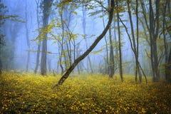 Vårskog i dimma naturlig härlig liggande tappning för stil för illustrationlilja röd royaltyfria bilder