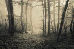 Vårskog i dimma naturlig härlig liggande Tappningstyl royaltyfri fotografi