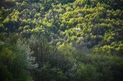 Vårskog med alla färgsignaler av gräsplan, specialt ljus - foto från den lösa naturen, träd, blad och vita blommor i blomning - f Royaltyfria Foton