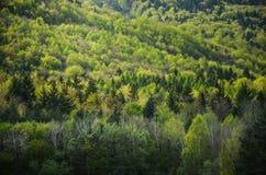 Vårskog med alla färgsignaler av gräsplan, specialt ljus - foto från den lösa naturen, träd, blad och vita blommor i blomning - f Arkivbild