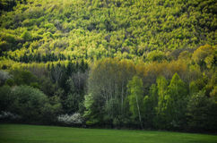 Vårskog med alla färgsignaler av gräsplan, specialt ljus - foto från den lösa naturen, träd, blad och vita blommor i blomning - f Arkivbilder