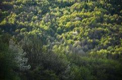 Vårskog med alla färgsignaler av gräsplan, specialt ljus - foto från den lösa naturen, träd, blad och vita blommor i blomning - f Arkivfoton