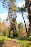 Vårskog med mycket härliga träd Royaltyfri Foto