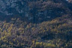 Vårskog och aftonljussikt Royaltyfria Bilder