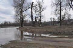 Vårskog och flodbank Arkivbilder