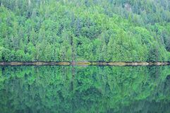 Vårskog vid havkusten Fotografering för Bildbyråer