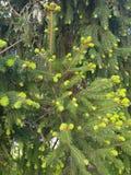 Vårskogträd fotografering för bildbyråer