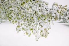 Vårsnö fotografering för bildbyråer