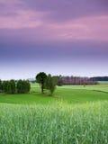 Vårsolnedgånglandskap Arkivfoto