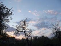 Vårsoluppgång i trädgården Royaltyfria Foton