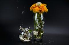 Vårstilleben från maskrosor och körsbärsröda blomningar Royaltyfri Fotografi