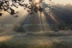 Vårstrålar av solen i skogen arkivfoton