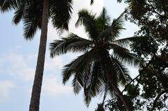 Vårt lopp till Indien till tillståndet av Goa Arkivbilder