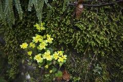 Vårtecken Royaltyfria Bilder