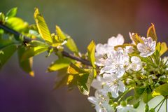 Vårtid, djur, natur väcker, fåglar är sjungande, blommor startar att blomma Royaltyfri Bild