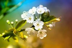 Vårtid, djur, natur väcker, fåglar är sjungande, blommor startar att blomma Arkivbilder