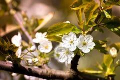 Vårtid, djur, natur väcker, fåglar är sjungande, blommor startar att blomma Arkivfoto