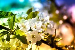 Vårtid, djur, natur väcker, fåglar är sjungande, blommor startar att blomma Royaltyfri Foto