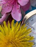 Vårtid har kommit Skjuten makro - vårblomningtapet Arkivfoto