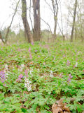 Vårtid i en skog Fotografering för Bildbyråer