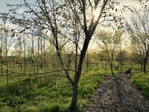 Vårtid på parken- Toronto Royaltyfri Fotografi