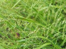 Vårtid som kärnar ur växter Arkivfoto