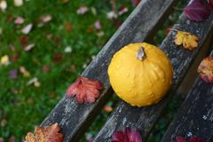Vårtig gul dekorativ kalebass på lantlig träbänk royaltyfria foton