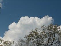 Vårträd med clouds2 Royaltyfri Fotografi