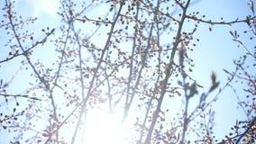 Vårträd mot solen arkivfilmer